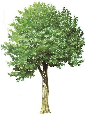 Stromy Kolem Nas